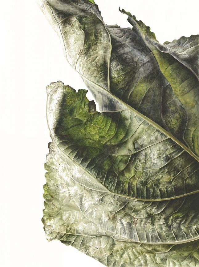 Leaf Watercolour Jess Shepherd