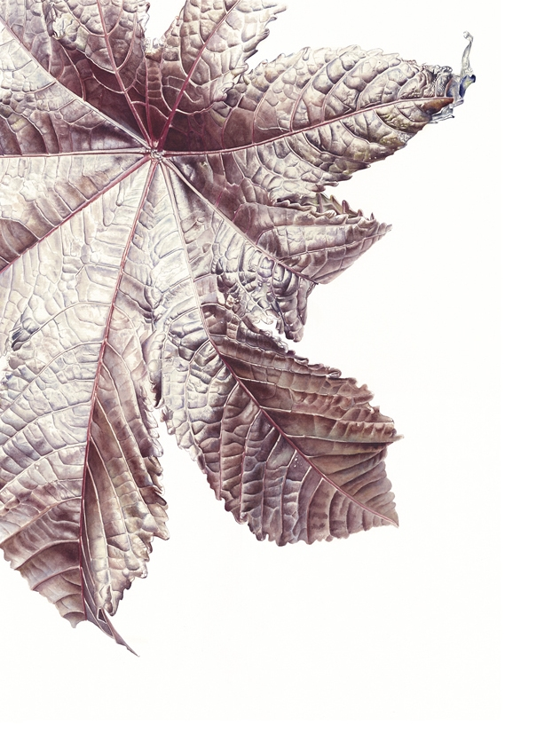 Vitis vinifera Large-Scale Watercolour on paper Jess Shepherd